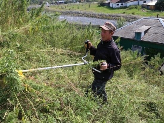 В Республике Алтай стартовала операция «Мак-2021»