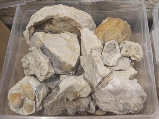 Участники экспедиции РГО нашли в карьерах Солигаличского известкового комбината артефакты
