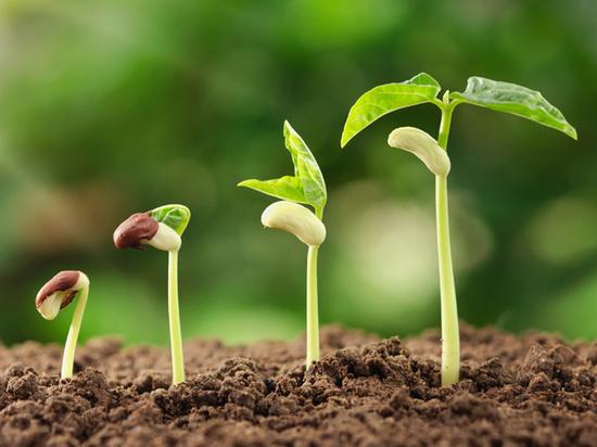 Россельхозбанк назвал факторы роста спроса на мясо и напитки на растительной основе