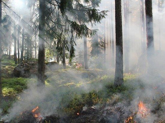 К 9 июня в Марий Эл произошло 13 лесных пожаров
