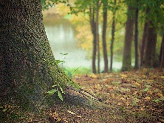 В Тюменских лесах отменен режим ЧС