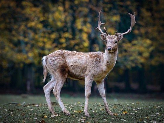 Кузбасские власти объяснили частые выходы диких животных к людям