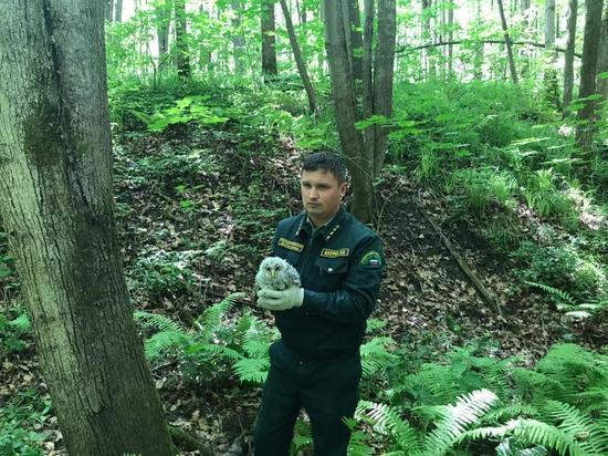В Богородском районе перенесли рубку деревьев, чтобы спасти совят