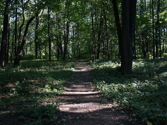Петербуржцы стали в четыре раза чаще пропадать в лесах