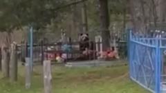 Видео сбежавшего в Мытищах медведя на кладбище оказалось фейком