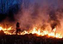 Наивысший класс пожарной опасности установлен в Псковской области