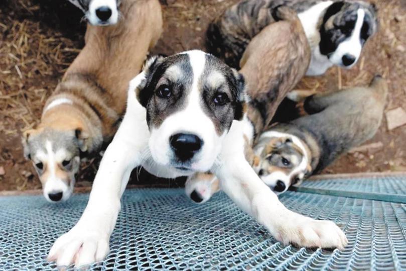 Проблема сотен тысяч бездомных животных вышла на президентский уровень