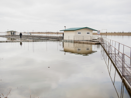 В районе Калмыкии была пресечена незаконная добыча рыбы