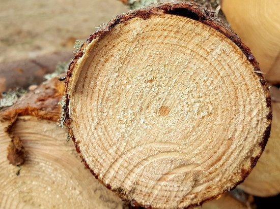 Уголовное дело возбудили по контрабанде леса на 600 млн руб из Забайкалья в КНР