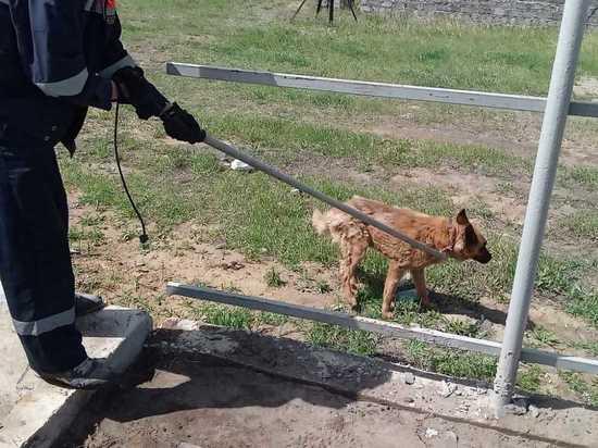 Спасатели вытащили собаку из 3-метрового коллектора в Чите