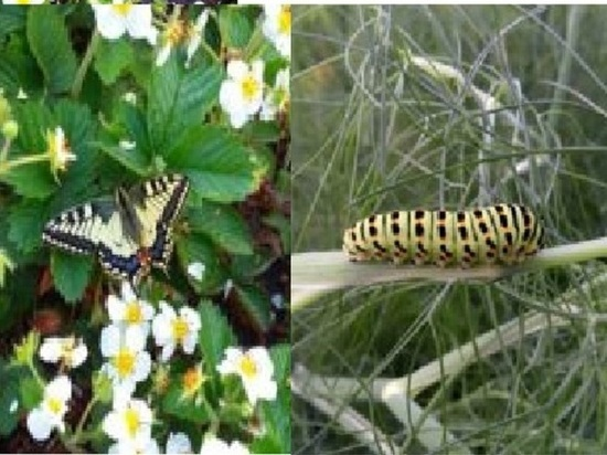 Стихийная ферма бабочек появилась в Кузбассе благодаря спортсмену