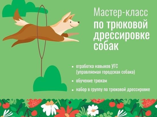 Жителей Серпухова пригласили на мастер-класс по дрессировке собак