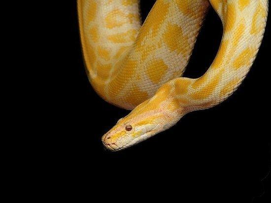 В Марий Эл незаконно прибыли 23 экзотических животных
