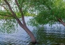 В Челябинской области до +26,дождиигрозы