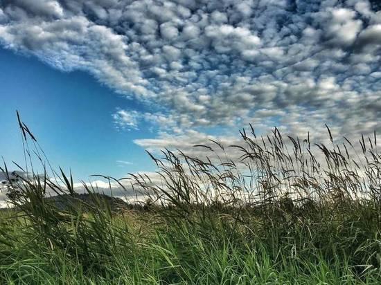 Жителей Хакасии ждут три ветреных и совсем не жарких дня