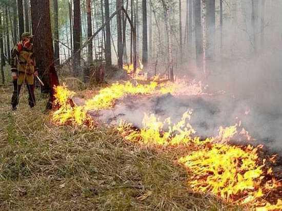 В лесах Хангаласского улуса Якутии ввели режим ЧС
