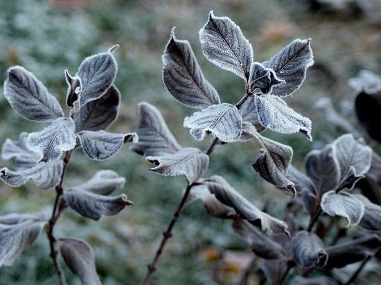 Заморозки ожидаются в Алтайском крае 11 июня