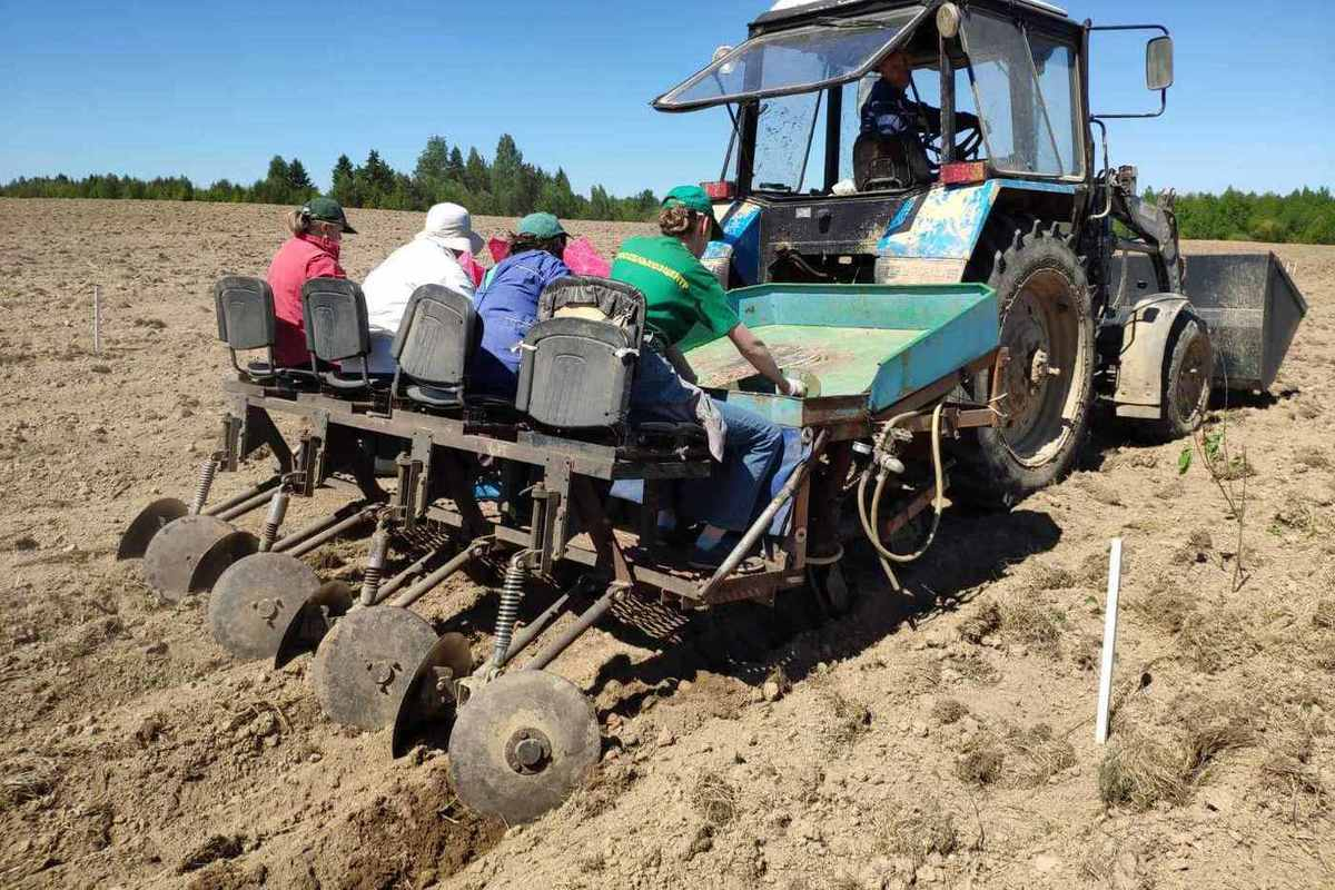 Специалисты рассказали как проходит проверка картофеля из соседних регионов в Костромской области
