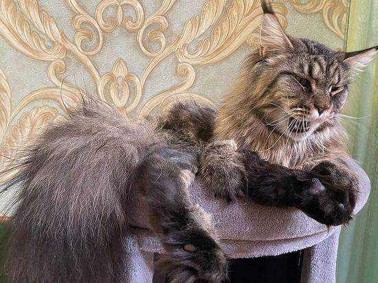 Главного кота саратовского минздрава привьют от коронавируса