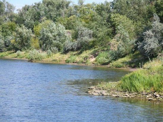 В Волгограде проверят сообщения о массовой гибели рыбы в реке