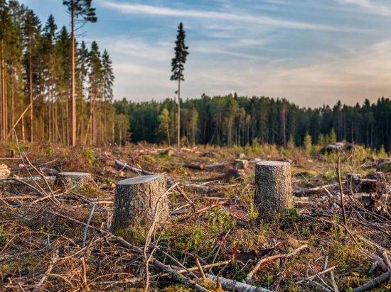 В Климовском лесу неизвестный вырубил две ольхи на 11 тысяч рублей