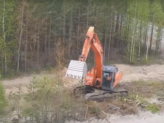 «Мэр обещал пересаживать»: уничтожение деревьев экскаватором возмутило жителей Ноябрьска