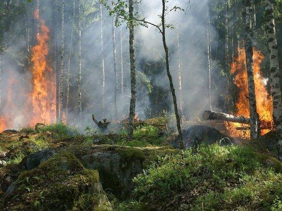 В Кировской области сгорело 20 гектар леса
