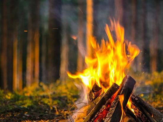 В Челябинской области сняли запрет на посещение лесов