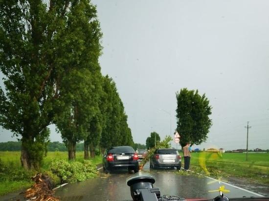 В районе села Беловского на автомобиль упало дерево