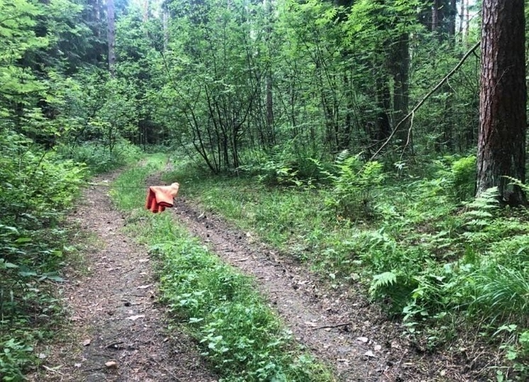 В лесу под Раменским неизвестные расставили подлые ловушки на людей
