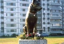 Рыбинцы просят поставить памятник собачьей верности