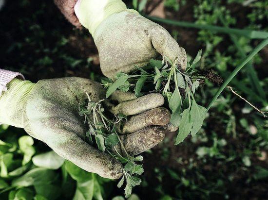 В Бурятии сельхозучасток зарос двухметровыми деревьями