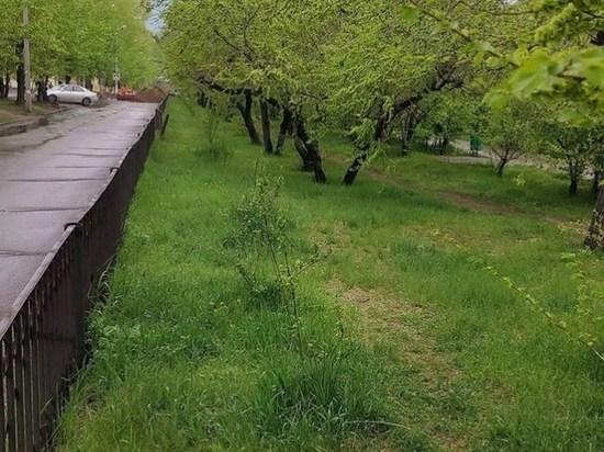 Деревья пересадят к 15 июня для ремонта сетей на аллее Горького в Чите