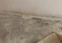 «Квартира-убийца»: стены в комнате пенсионера из Ноябрьска заросли плесенью