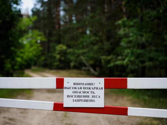 Минприроды не запрещает жителям Карелии посещать леса в пожароопасный сезон