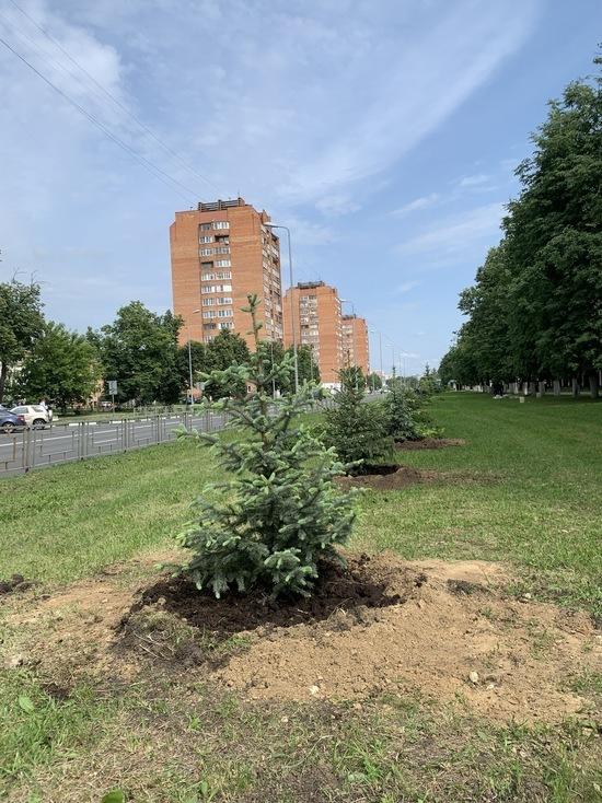 2375  деревьев и кустарников высадят в Автозаводском районе