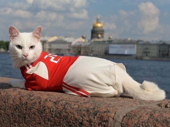 Эрмитажный кот Ахилл предсказал исход матча Турция – Италия