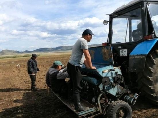 Студенты сельхозфакультета Тувинского госуниверситета помогли хлеборобам