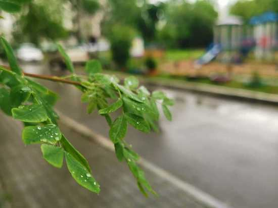 Озвучен прогноз погоды в Хабаровске и крае на 12 июня