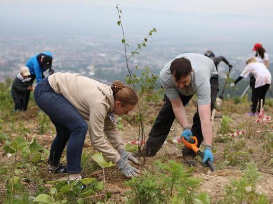 Нефтяники высадили молодые деревья на горе Большевик в Южно-Сахалинске
