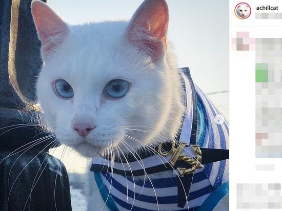 Эрмитажный кот Ахилл предсказал поражение сборной РФ в стартовом матче Евро