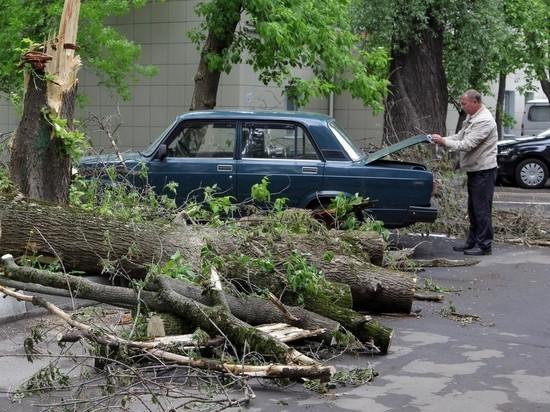 Москвичей попросили не парковаться под деревьями