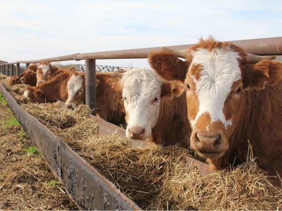 В Белебеевском районе Башкирии построят современный мясокомбинат