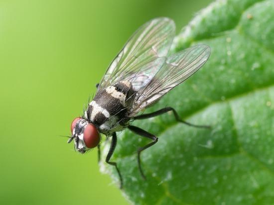 Названы 3 быстрых способа избавиться от мух дома