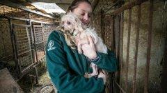 Предпринимательницу из Черногорска могут привлечь за мошенничество и жесткое обращение с животными