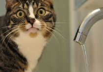 В Абакане пять дней не будет горячей и один день никакой воды в августе