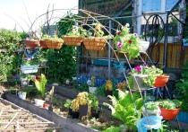 В столице Тувы стартовал традиционный конкурс «Цветущий Кызыл»