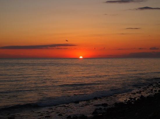 Море в Геленджике цветет, но это туристов не останавливает
