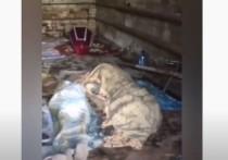 В Забайкалье нашли гараж с трупами