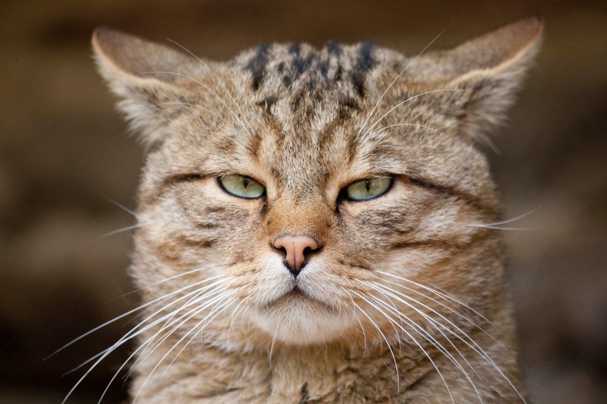 Дорогостоящий кот:  домашний любимец костромской семьи проявил тягу к свободе, но ввел хозяев в расходы
